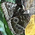 Picture Title - Butterflies