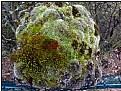 Picture Title - mini mossgarden