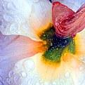 Picture Title - Daffodil