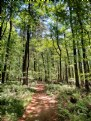 Picture Title - The Pinecroft Trail