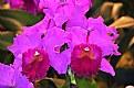 Picture Title - Purple Orchid