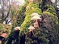 Picture Title - mushroom