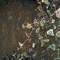 Picture Title - ivy