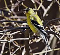 Picture Title - Goldfinch- summer-fashion