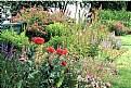 Picture Title - Deepwood Garden