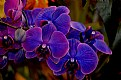 Picture Title - Orchids Of All Colors