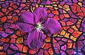 Picture Title - Purple Clematis 3