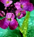 Picture Title - Purple Flowers