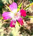 Picture Title - Purple Flower