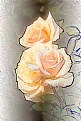 Picture Title - Soft Yellow Roses