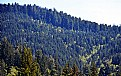 Picture Title - New & Old Growth Forest - Gold Bluffs Entry