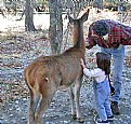 Picture Title - Deer, Child & Father