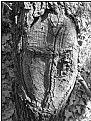 Picture Title - cross shield