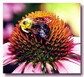Picture Title - Bee
