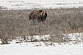 Picture Title - Where Grizzlys still roam