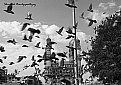 Picture Title - The Flight of Pigeons