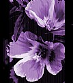 Picture Title - Flower In Purple