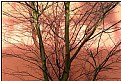 Picture Title - wintersun tree