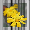 Picture Title - Yellow Flower
