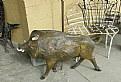 Picture Title - Wild Boar