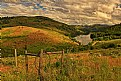 Picture Title - Fenced in Lanscape