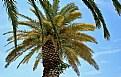 Picture Title - Palm Tree & Colour