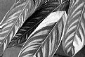Picture Title - Striped Leaves