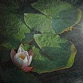 Picture Title - Water lilies II