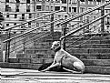 Picture Title - Greyhound Steps