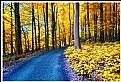 Picture Title - **Last Autumn**
