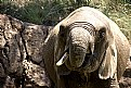 Picture Title - Drinking Elephant