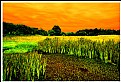 Picture Title - **Art Of Nature**