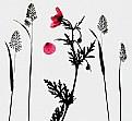 Picture Title - Poppy drop