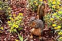 Picture Title - Squirrel!
