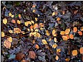 Picture Title - yellow leaves on brown