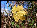 Picture Title - dry leaf