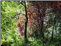 Picture Title - monsieur renoir's garden
