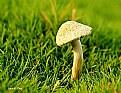 Picture Title - Mushroom..