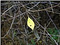 Picture Title - one last leaf
