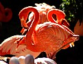Picture Title - Flamingos At The Zoo