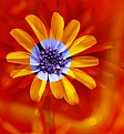 Picture Title - A Flower