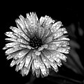 Picture Title - Flower And Water Drops