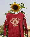 Picture Title - WSU Sunflower