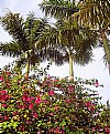 Picture Title - Flowers & Palm Trees