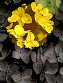 Picture Title - One Yellow Flower