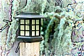 Picture Title - Backyard Lamp