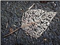 Picture Title - dead leaf
