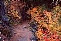 Picture Title - Proxy Falls Trail