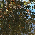Picture Title - fall reflections
