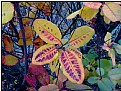 Picture Title - fallcolor leaves